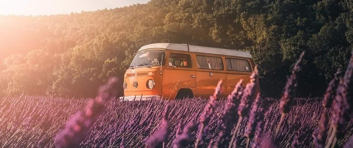 hippy-lavande